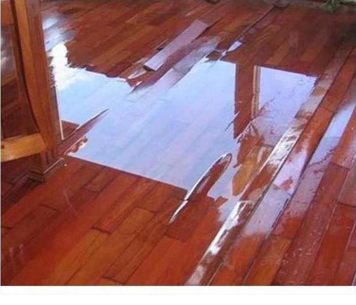 water pooling on a dark hardwood flooring with slight buckling of the boards