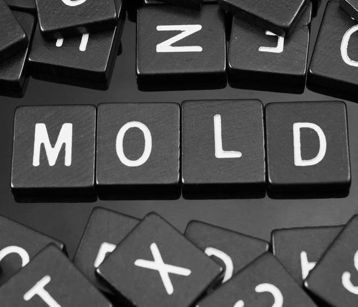 The word Mold spelled out on wooden Letters